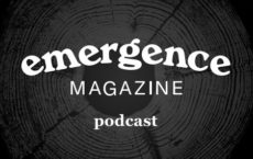 "The text ""Emergence Magazine Podcast"" laid across a black and grey imprint of tree rings."