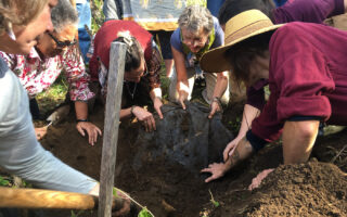 Women digging biodynamic nettle preparation at Avena Botanicals in Maine.