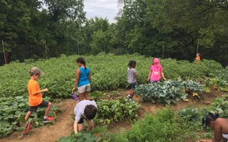 Children explore a verdant summer garden.