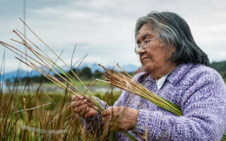 An Indigenous woman gathers rushes for traditional basketry in a marsh.