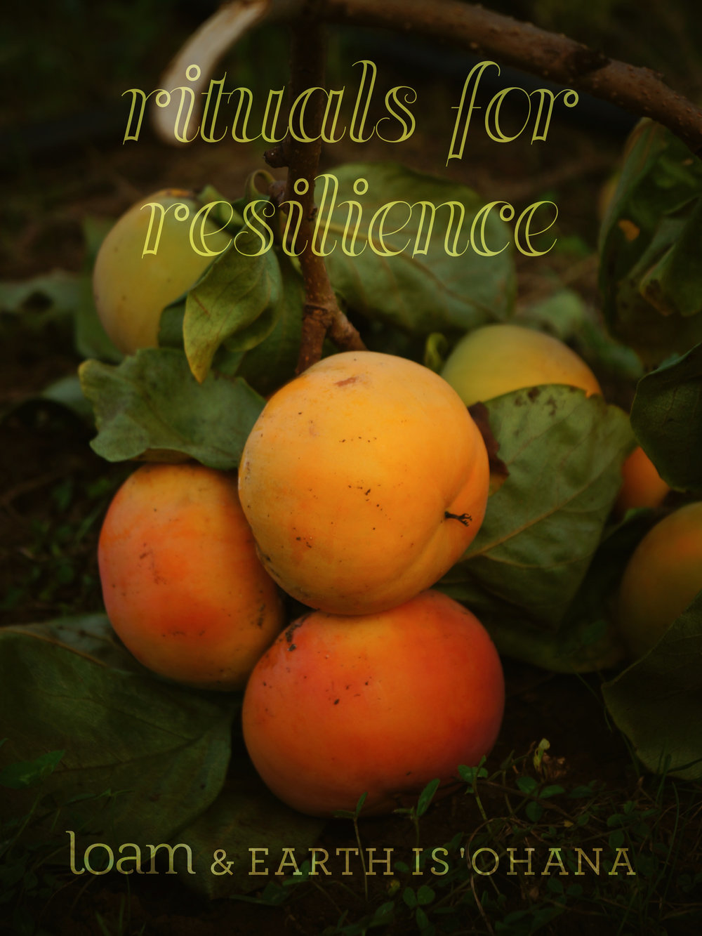 A bough of bright orange stone fruit rests on the dark earth.
