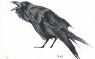 An illustrated raven calls out.