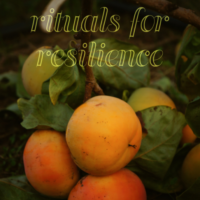 Cover of the book Rituals of Resilience