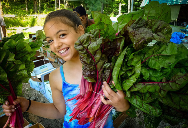 A girl volunteering on the farm holds bundles of freshly picked chard.