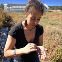 Donne Gonzales examines lambsquarter seeds on her family's land.