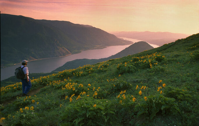 A hiker on Dog Mountain looks out at the Columbia River Gorge