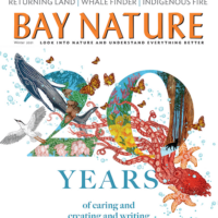 Cover of Bay Nature's Winter 2021 issue